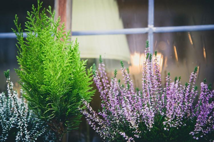 Deset biljaka koje odbijaju komarce i muve
